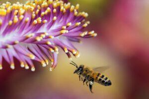 arı 1